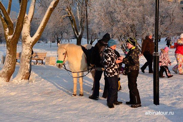 Зимнее катание на лошадки в яблоневом саду СПб