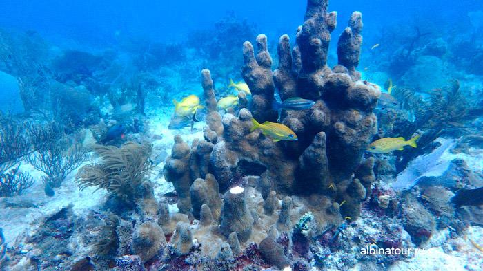 Дайвинг у кораллового рифа Карибское море