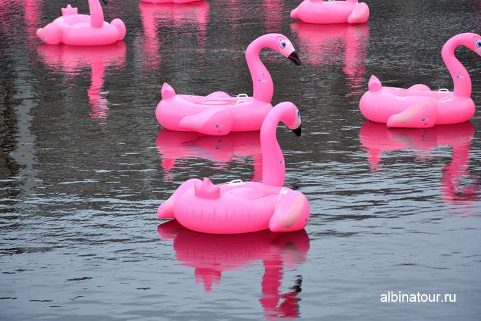 Фото Розовые фламинго в Санкт-Петербурге Новая голландия