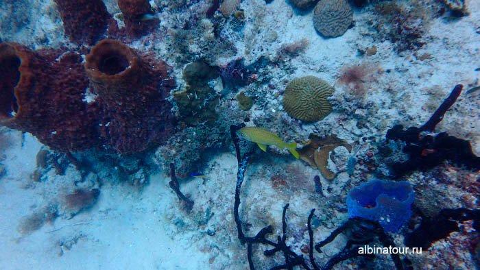 Фото Рыбки, кораллы и морские губки