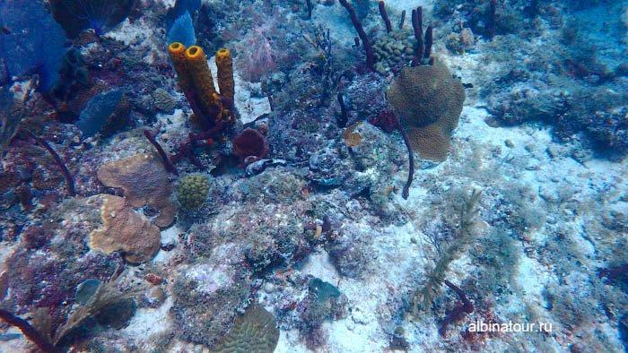 Фото подводное царство Карибского моря