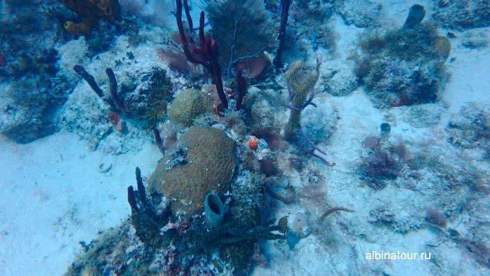 Фото Морская жизнь