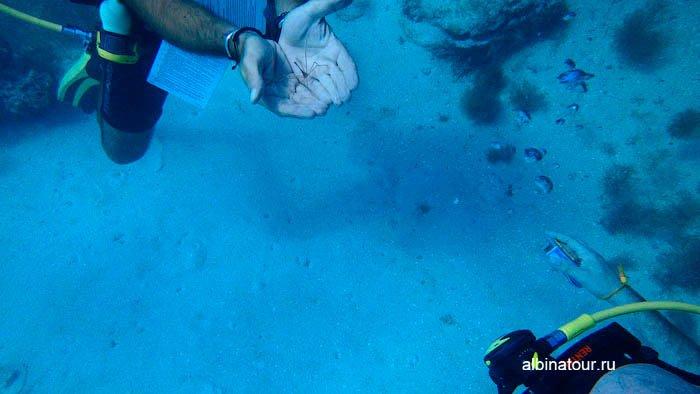 Фотография подводного жука-паука