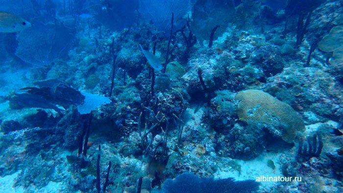 Фото Подводный мир у Ла Романа Доминикана