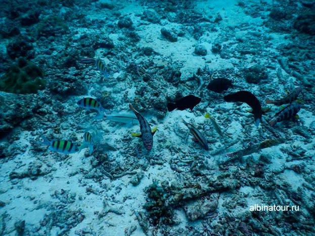 Фото Дно моря на второй стоянки корабля у острова Рача яй