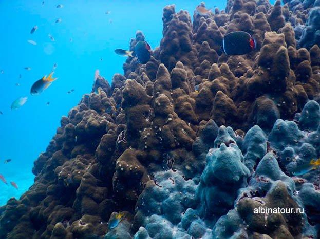 Фото 2 Подводный мир разнообразен и красив