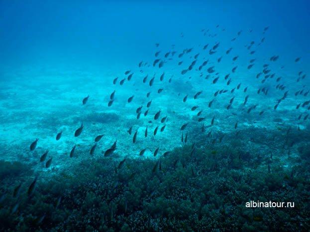 Фото косяк рыб на границе кораллов