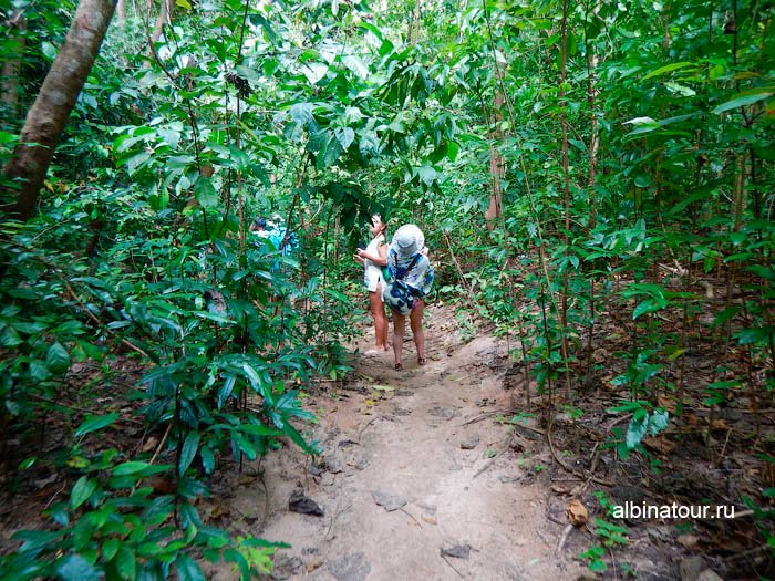 ФотоТропинка в джунглях