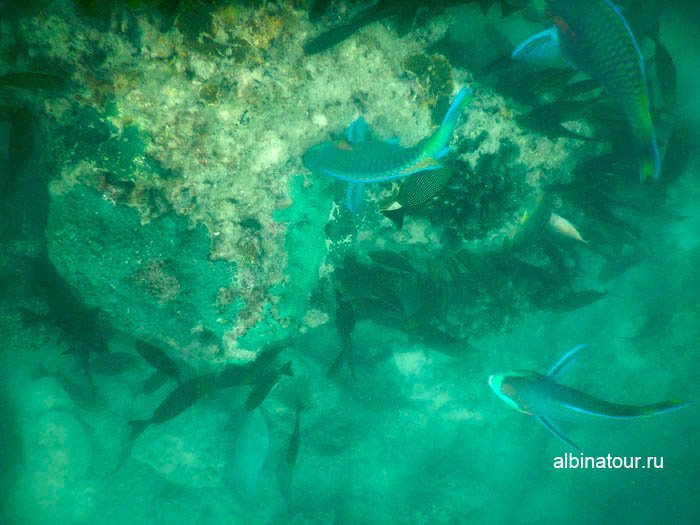 Фото Кормление рыбок на пляже