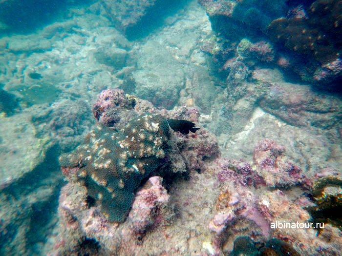 Вода стала прозрачнее фото дна морского