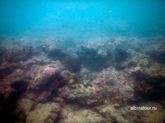 Фото Морское дно в 5 метрах от пляжа остров Хонг