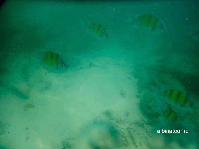 Фото Очень мутная вода для снорклинга на море