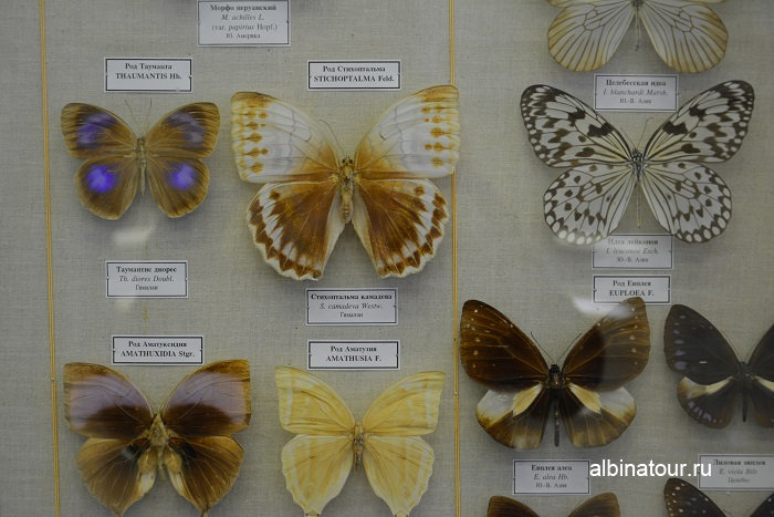 Фото бабочек в Зоологическом музеи в СПб