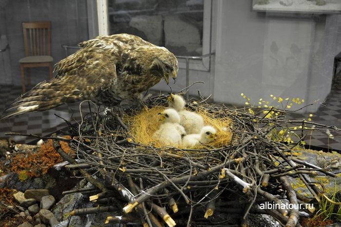 Фото гнезда