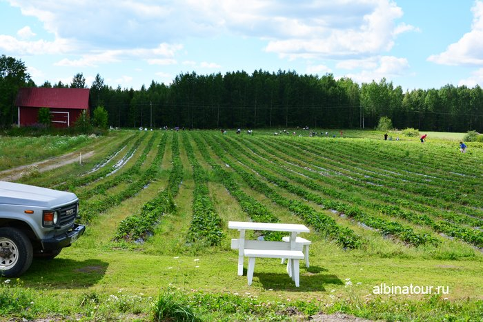 Фото поля и работники сбор клубники в Финляндии